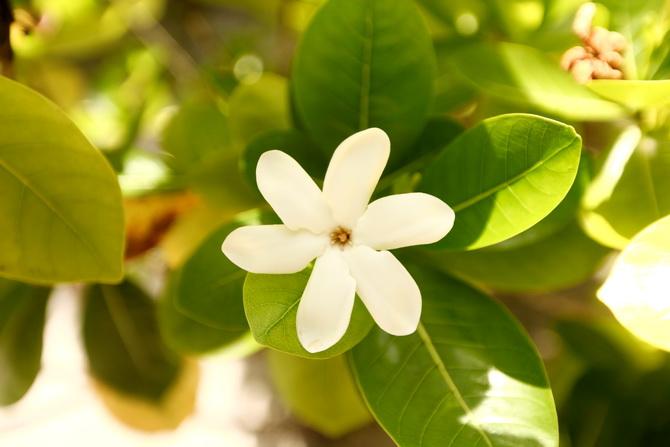 The Cherry Blossom Girl - Somewhere over the rainbow Tahiti 02