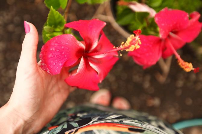The Cherry Blossom Girl - Somewhere over the rainbow Tahiti 06