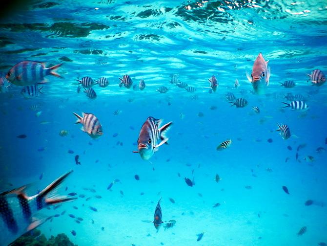 The Cherry Blossom Girl - Bora Bora 04