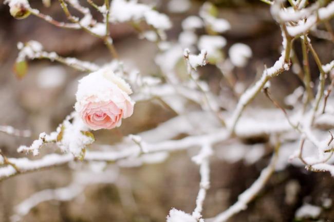 Treasure-in-the-snow-01