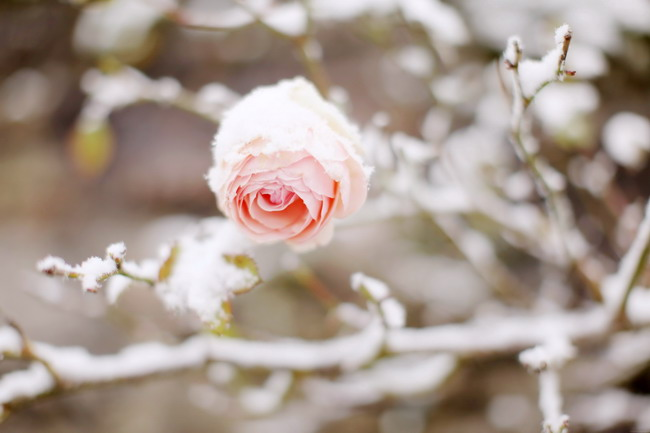 Treasure-in-the-snow-02